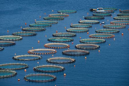 HiSea runs live service and platform demo webinar, highlighting accuracy, for aquaculture users